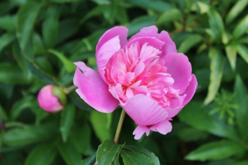 olika sorters blommor